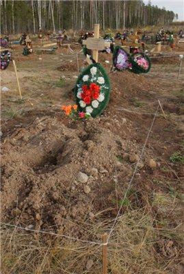 Медведь вытащил труп из могилы.