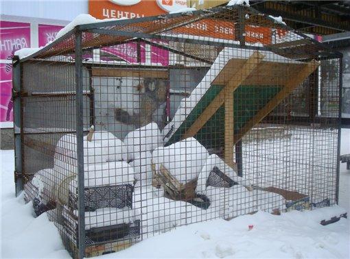 ...побросали опустевшие ларьки, которые постепенно превращаются в мусорки и портят вид заснеженных сыктывкарских улиц.